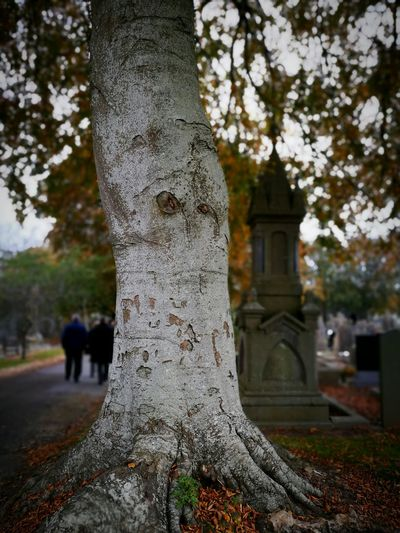 Tree Outdoors Graveyard Autumn Leaves Nature People And Places Tree Trunk