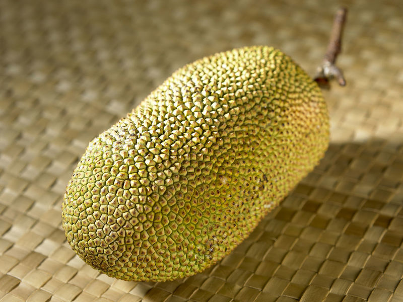 cempedak malaysia fruit Jack Fruit Raw Tropical Fruits Asian Fruit Cempedak Close-up Day Food Food And Drink Freshness Nature No People Strong Smell Whole Yellow
