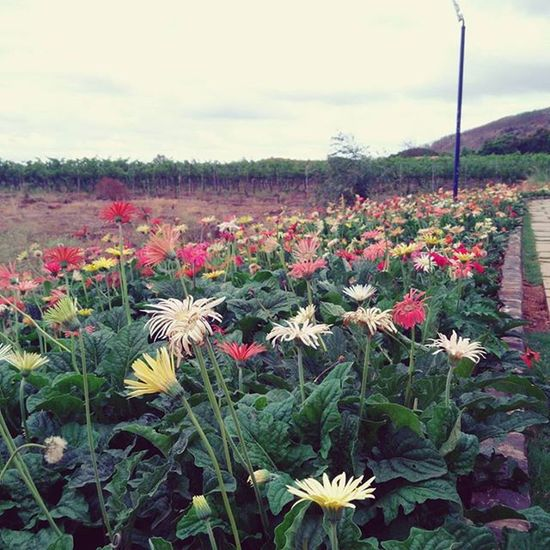 Charmes Nasik Throwback Takemeback Prettylittlethings Flowers SulaVineyards Sula PrettyPretty