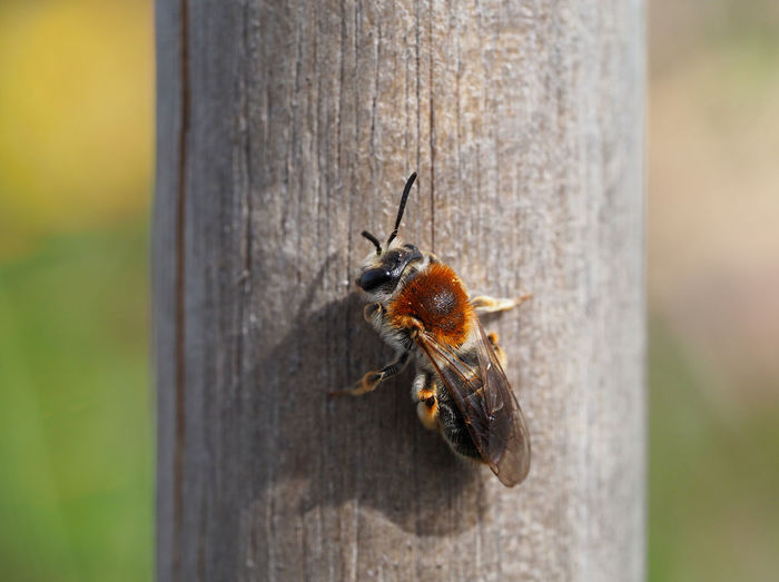 Close-up of bee on tree trunk