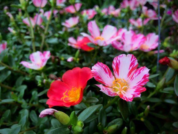 Flower Flowers Flowers,Plants & Garden Garden Garden Photography Garden Flowers Park Park Flowers Flora Floral