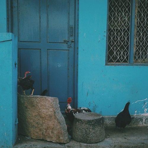 Chick&Door