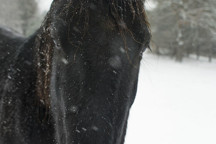 Snowflake Horse Nature Animal Close-up Snow Covered Snowfall Cold Snow Cold Temperature Winter The Portraitist - 2018 EyeEm Awards