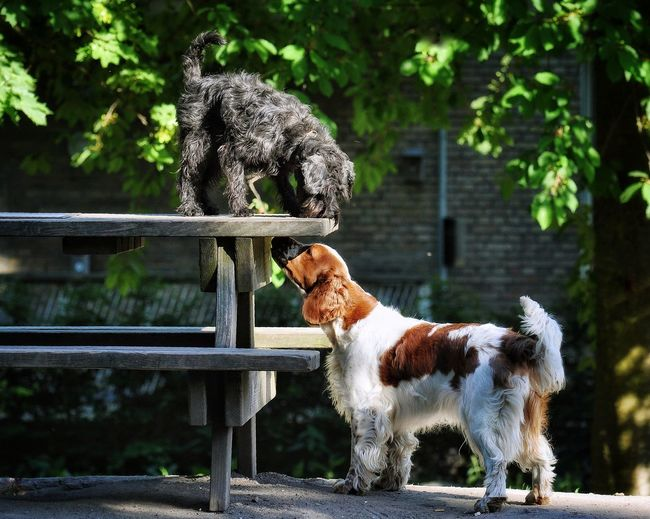 Dogs in park