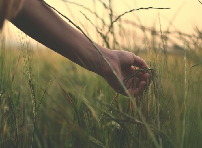 Close-Up Of Hand On Grass In Field
