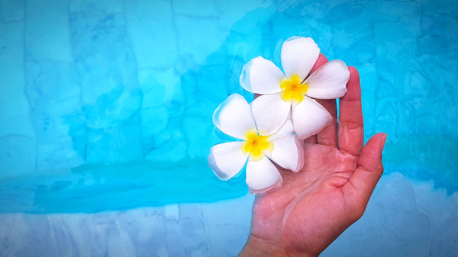 Close-up of hand holding white flower in swimming pool