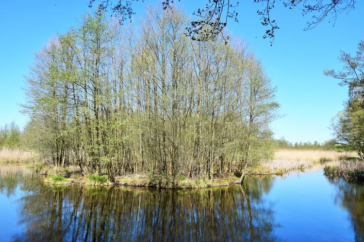 Am Fliess entlang laufen wir zum Abschluss in Richtung Seebrücke direkt an der Lodge. Plant Tree Water Tranquility Reflection Tranquil Scene Lake Beauty In Nature Scenics - Nature Sky Nature Growth Day No People Non-urban Scene Land Forest Waterfront Outdoors Swamp