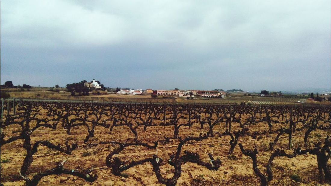Vineyards  Landscape TOWNSCAPE Landscapes With WhiteWall Mobile Photography