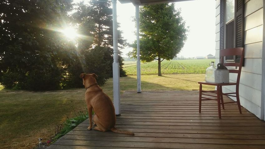 Country Life Dogs Of EyeEm Photo Of The Day Ohio, USA CountryLivinG Country Morning Beautiful Day Beautiful Morning Early Morning Peaceful Moments Morning View Home Is Where The Art Is Home Is Where The Art Is.