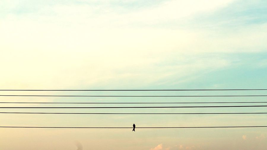 Low Angle View Of Bird On Power Line Against Sky