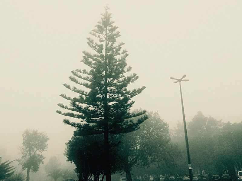 Trees and fog Portugal EyeEm Portugal Cascais E Estoril EyeEm Best Shots Trees Fog Foggy Morning Fog_collection Tree_collection