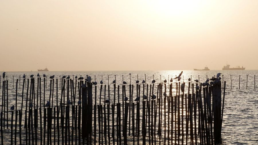Wooden posts in sea against clear sky