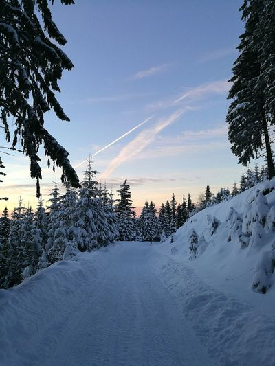 Snowy Road Tree Snow Winter Cold Temperature Pine Tree Landscape Sunset Scenics Beauty In Nature Nature Forest No People Sky Outdoors Mountain Trees Coniferous Tree EyeEm Best Shots EyeEmBestPics EyeEm Gallery Wallpapers Branch Nature Tranquility Beauty In Nature