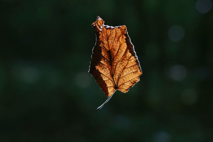 Change Leaf Autumn Insect One Animal Focus On Foreground Butterfly - Insect Nature Outdoors Animal Wildlife Day Animals In The Wild No People Fragility Close-up Cocoon Animal Themes Full Length Beauty In Nature