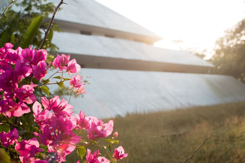 EyeEm Selects Plant Flower Flowering Plant Pink Color Freshness Beauty In Nature Growth Nature Fragility Close-up Vulnerability  No People Day Focus On Foreground Outdoors Sky Architecture Blossom Built Structure Springtime
