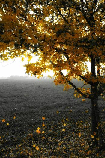 Foglie Gialle Foglie Giallo Giallonero Autumn Leaves Leaves Tree Autumn Autumn Colors Autumnbeauty Autunno  First Eyeem Photo