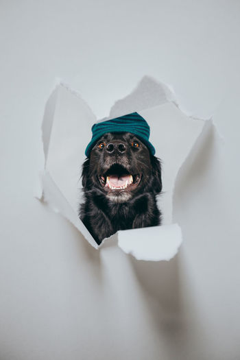 Portrait of dog over white background