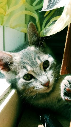 My Beautiful Cat🐈 Oh Life In His Eye Catface Cat Lovers My Cats My Bestfriend Catslife Catsoftheworld Baby Cats Her Eyes <3 Cats In Random Places Cats In The Window Taking Photos Relaxing Moments My Cats Just Chillen by : •_mconnolly🐈❤🌼