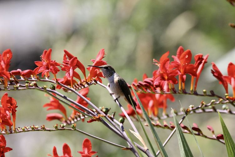 View of bird perching on red flower