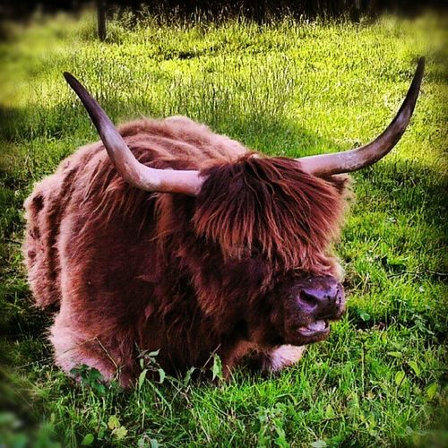 Hey my buddy Bison Animal Igersgermany Igersbavaria