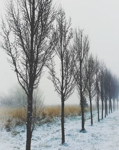 Cisza też jest odpowiedzią Anyway Noescape Photography Fotografia Silence #Gdansk #Danzig Beautiful Photo Silence Of Nature Firstsnow Black śnieg Neige Nature Spokój Nostalgic  Alone Noleaves Tree Snow Bare Tree Cold Temperature Winter Branch Tree Trunk Sky Landscape Foggy Single Tree EyeEmNewHere