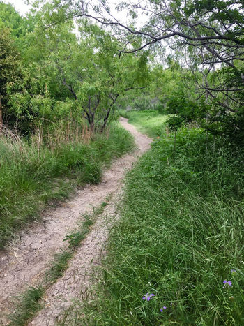 hiking trail landscape Path Beauty In Nature Day Diminishing Perspective Direction Environment Footpath Forest Grass Green Color Growth Land Landscape Long Nature No People Outdoors Plant Road Scenics - Nature The Way Forward Trail Tranquil Scene Tranquility Tree
