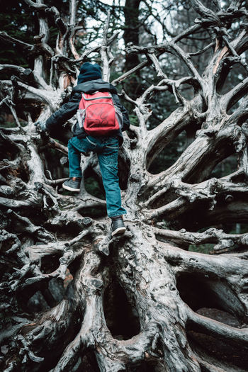 Calm Melancholic Landscapes Adventure Big Tree Branch Climbing Day Forest Full Length Nature One Person Outdoors People Real People Rear View Tree Perspectives On Nature EyeEm Ready   EyeEm Ready   This Is Masculinity Inner Power Visual Creativity