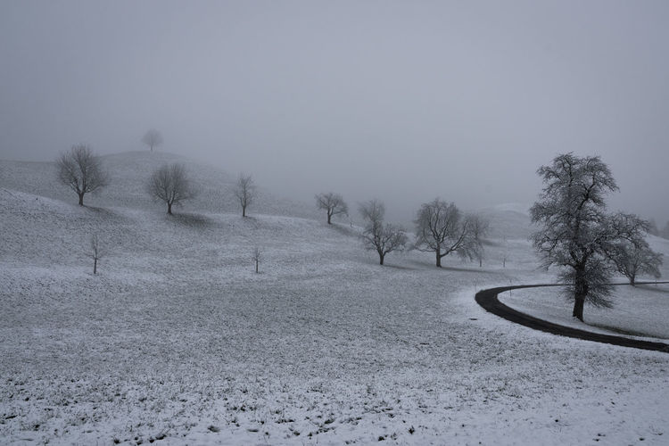 Winter is back Curve Nature Tree Trees Bare Tree Beauty In Nature Cold Temperature Day Hill Landscape Nature No People Outdoors Scenics Snow Street Tranquility Tree Winter
