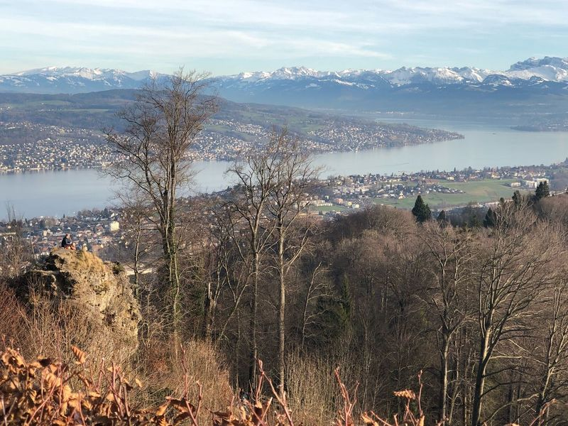 Uetliberg Tree Mountain Nature Outdoors Landscape Day Scenics Beauty In Nature