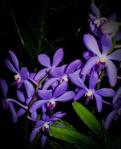 Flower Close Up Macro Photography Macro Nature Purple Flower Purple Orchids Purple Orchid