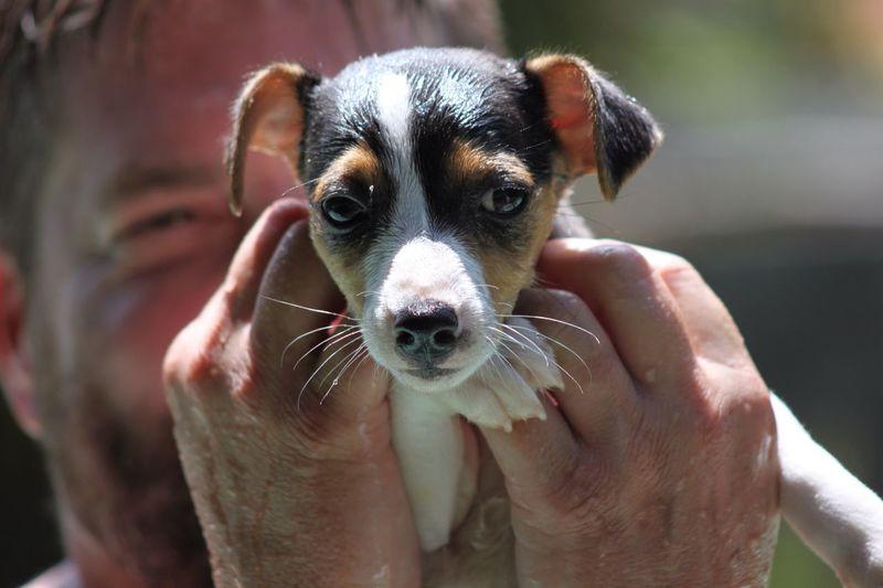 Portrait Of Puppy In Man's Hands