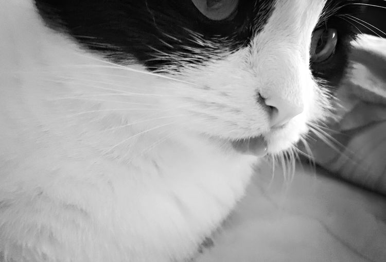 Cat, Cute, Closeup,