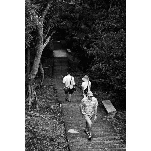 Rear view of people walking by tree
