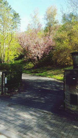 Tree Entrance Nature Fence