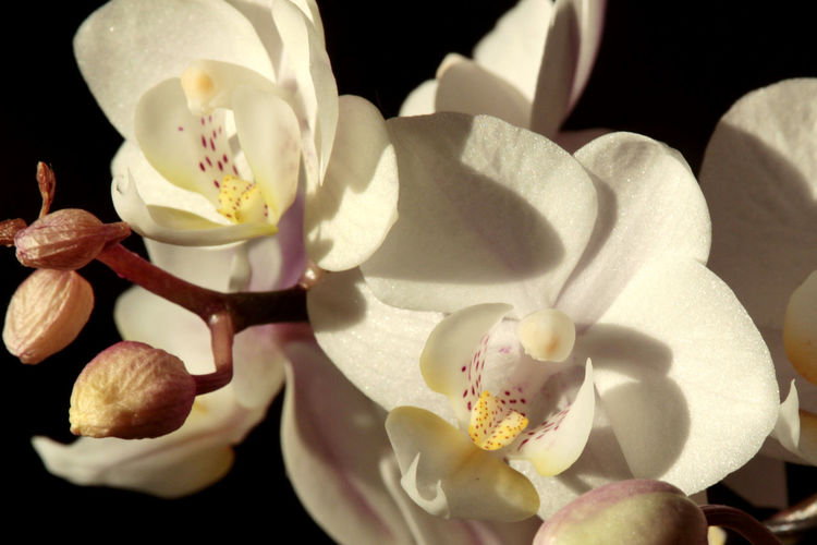 Orchidee Taking Photos Check This Out Enjoying Life Hello World Hurdegaryp Hanging Out Orchid