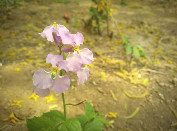 spring Spring Flower
