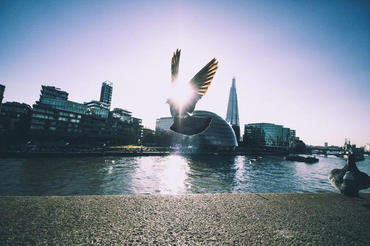EyeEm LOST IN London Fly away London Tower Bridge  The Shard, London River Thames Pigeons Sunset