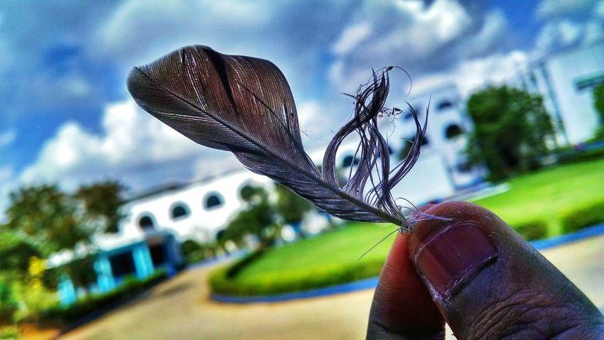 Abandoned part of a life Feather  Eye4photography  EyeEm Nature Lover EyeEm Best Shots Mobilephotography Taking Photos Moto X