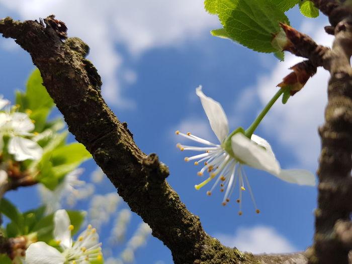 flower Flower Branch Flower Head Blue Springtime Leaf Sky Close-up Plant