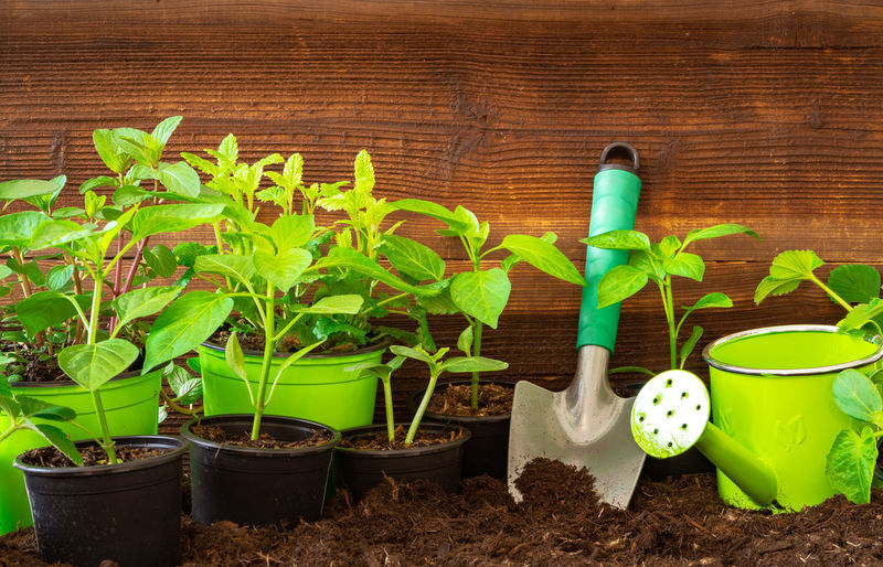 Gardening tools, lavender,rosmary, strawberry plants and seedlings on soil Growth Green Color Plant Nature Potted Plant Plant Part Leaf Watering Can Dirt Gardening No People Can Day Planting Beginnings Beauty In Nature Seedling New Life Outdoors Flower Pot Farming Garden Gardening Equipment Gardening Tools Seeding