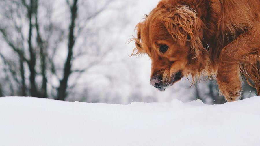 The Week on EyeEm EyeEm Selects Domestic Animals One Animal Dog Animal Themes Mammal Pets Winter Nature Snow Day Cold Temperature Outdoors Beauty In Nature Close-up