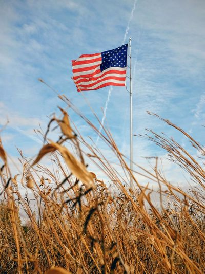 Low angle view of american flag by plants on field against cloudy sky