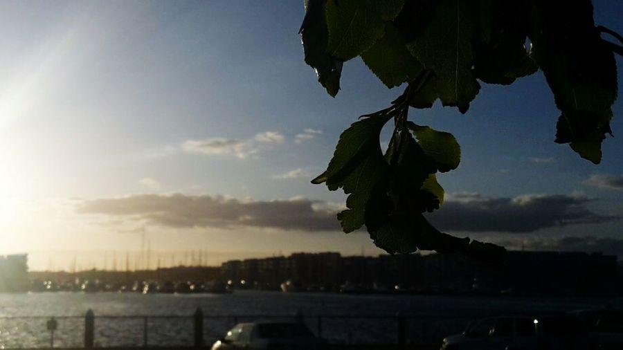 Play Del Rey Leaves Sun Set Silhouette