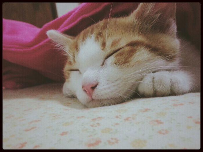 Cat Cat Sleeping