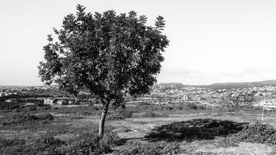 Plant Tree Sky Landscape Nature Environment Field Growth Day Beauty In Nature Land No People Tranquility Tranquil Scene Scenics - Nature Clear Sky Grass Outdoors Non-urban Scene Idyllic Blackandwhite Black And White EyeEm EyeEm Best Shots EyeEm Selects