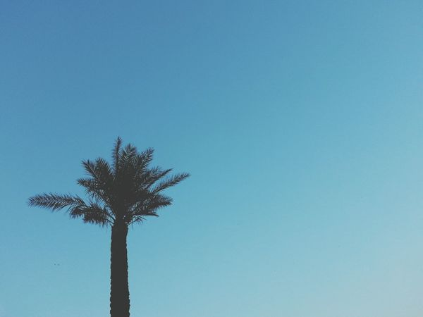 Palmtrees Something Beautiful Imperfect  Hugging A Tree Plants Tropical Paradise Minimalism Traveling Sardegna Italia