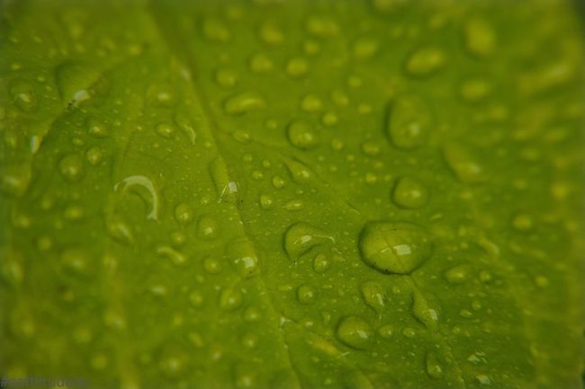 Rainy day in New England Water Full Frame Backgrounds Wet Drop Close-up Extreme Close-up Leaf Vein Green Color Selective Focus Freshness Fragility Droplet Extreme Close Up Water Drop Nature Dew Day Beauty In Nature Green Sethtrudeau Photography Rainy Days Spring Spring Life