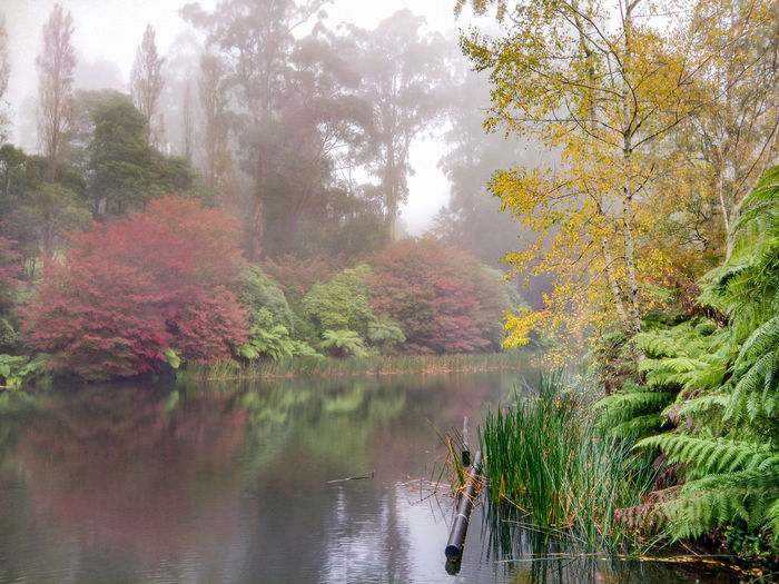 Contemplation By the Lake on a Misty Morning Australian Landscape Beauty In Nature Contemplation Dandenong Ranges Day Misty Misty Morning National Rhodendron Gardens Nature No People Olinda Outdoors Scenics Serenity Tranquil Scene Tranquility Tranquility Tree Victoria Water