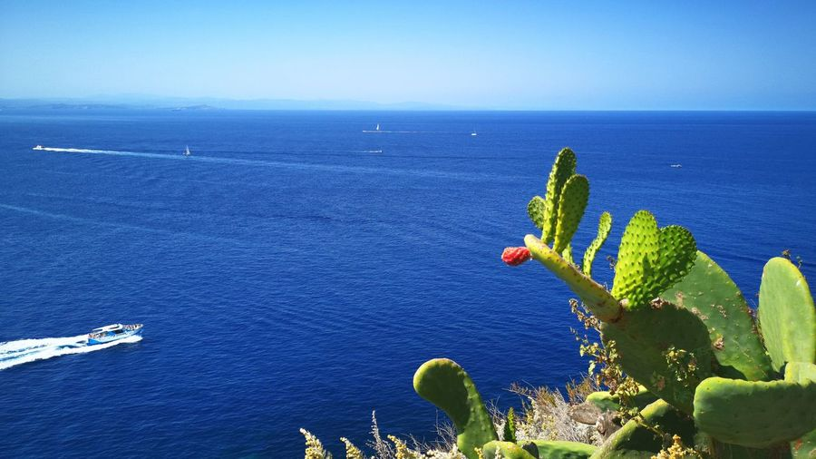 Bonifacio - Corsica Corsica Summer Holidays Vacanze Mare Mediterranean Sea Light Seaandsun Sea And Sun Cactus Fico D'India Water Sea Nautical Vessel Blue Beach Aerial View High Angle View Sky Horizon Over Water