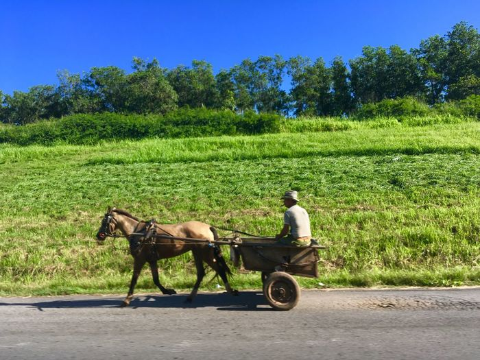 Cuban countryside Cuban Life Cuba Collection Cuba Transportation Mammal Domestic Animals Tree Domestic Real People Animal Nature Mode Of Transportation Cart Working Animal Sunlight